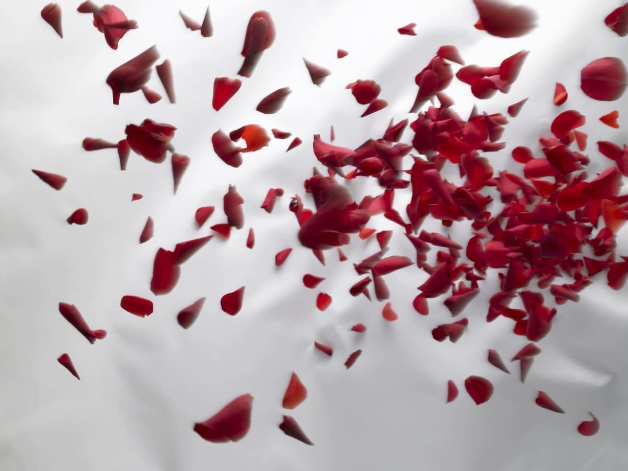 バラが飛び散っている(血が出ているイメージ)